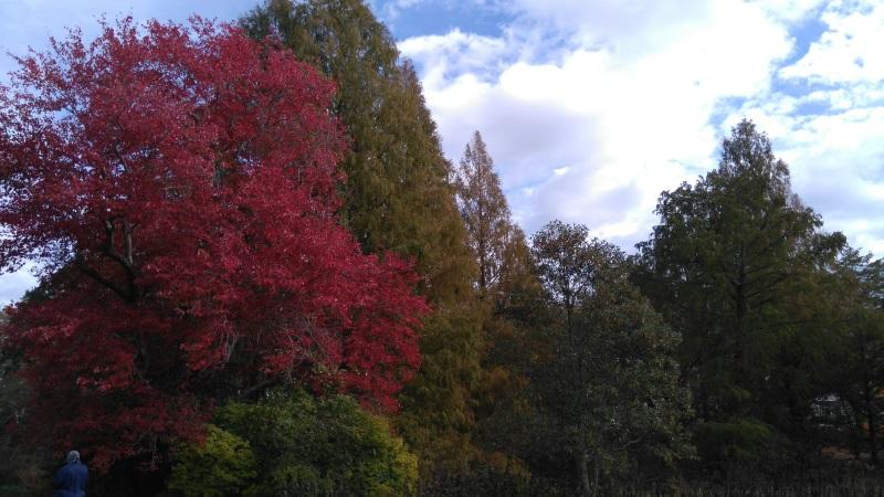 arnold-arboretum-park